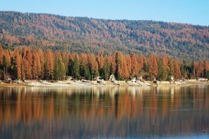 California plans to log its drought-killed trees
