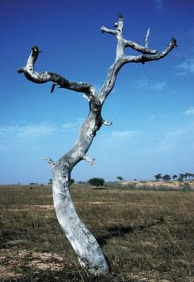 nps-climate-tree-jpg