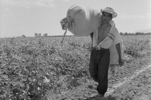 The afterlife of cotton