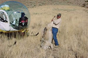 Latest: Wildlife Services to revisit predator removal effects