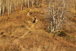 The deeper meaning of trails