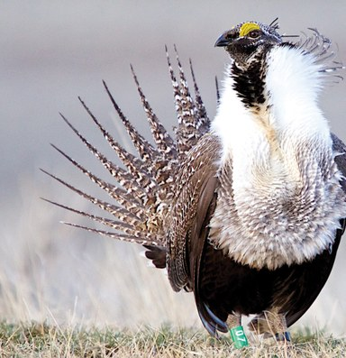 Latest: Feds plan sagebrush survey