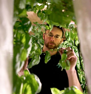 A new direction for indoor growers