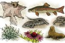 Obama's mixed impact on endangered species