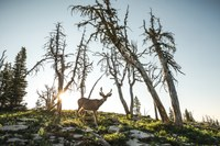 How the wild Northern Rockies were saved — and who led the way