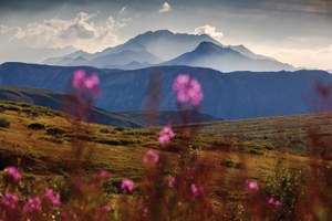 The beautiful wilds of national parks