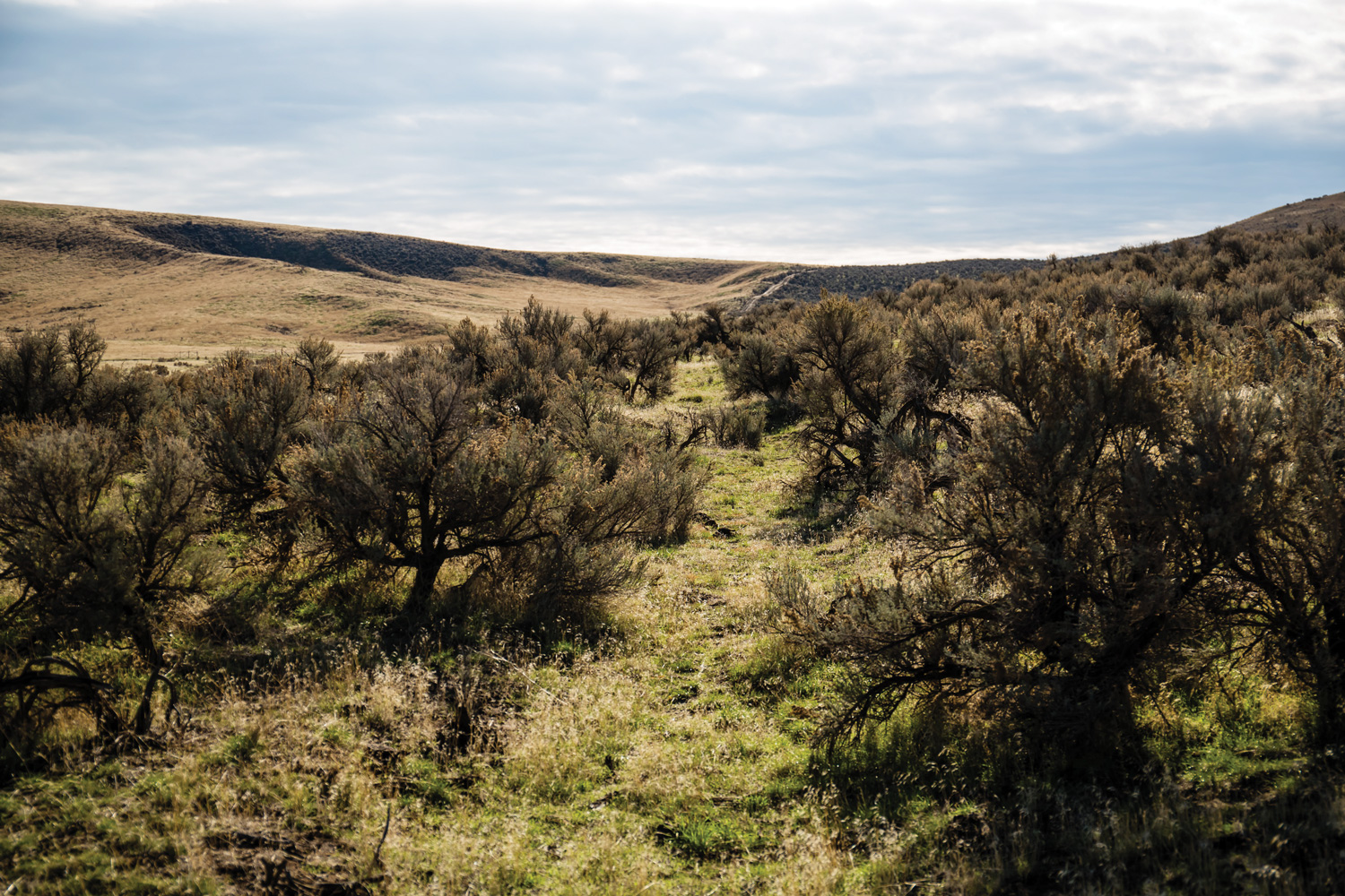 Wagon Ruts On The Oregon Trail At Keeney Pass South Of Vale, Oregon