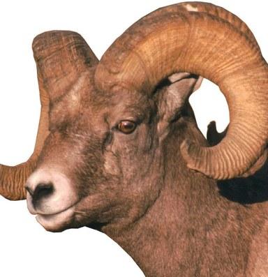 Latest: Courts backs domestic sheep reduction near Idaho's Hells Canyon