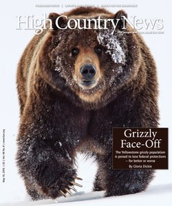 Grizzly Face-Off
