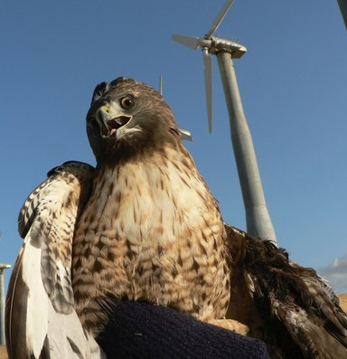 Latest: New wind farm releases plan to mitigate bird deaths