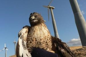 Latest: New wind farm releases plan to mitigate bird deaths