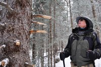 Who's cutting illegal ski trails in the Santa Fe National Forest?