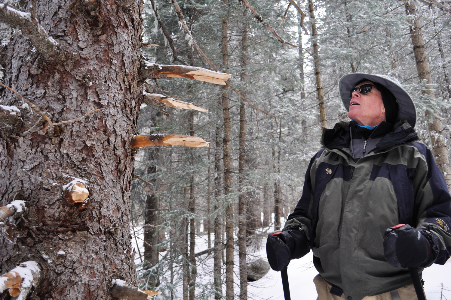 Who's cutting illegal ski trails in the Santa Fe National Forest