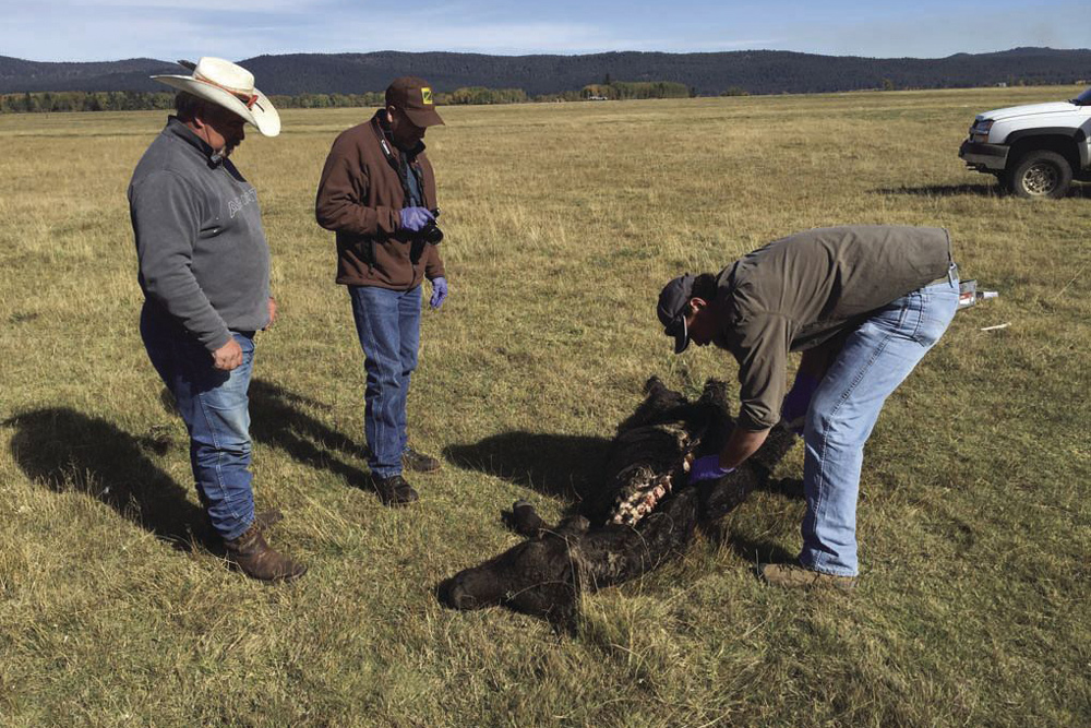 At the Nicholson Ranch, Butch Wampler, left, and Oregon Department of Fish and Wildlife ...