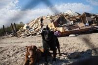 Amid California's toxic dumps, local activists go it alone
