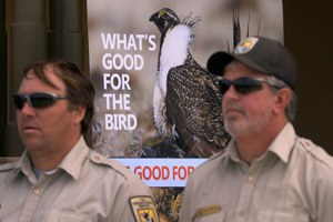 Interior overhauls sage grouse conservation