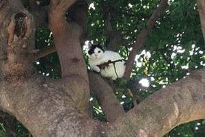 Gun-toting cats; bird killers; plastic bottles return