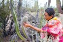 The Seri adapt to climate change in the desert
