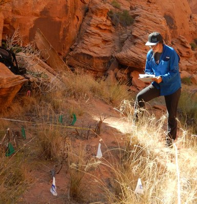 In Glen Canyon, a fight against invasive grasses