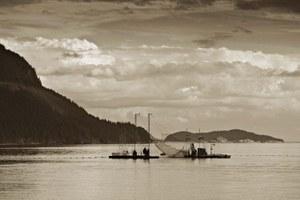 How much do salmon still shape the Northwest?