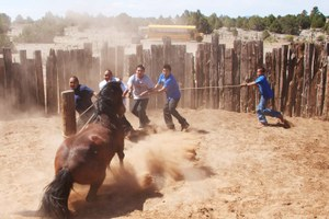 The Navajo Nation has a wild horse problem