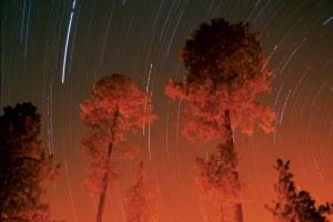 Ancestral Pueblo logging practices could save New Mexico pinelands