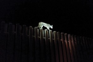 Where wildlife is up against the wall