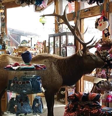 Wind swept; Pet lives matter; Moose, over produce