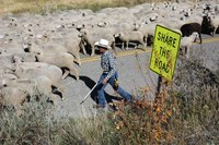 Kill bill; What's sprouting from Hell's backbone?; Mojave NIMBY