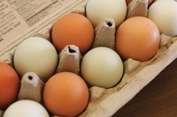 Fresh eggs and fresh journalism awards