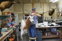 Inside a taxidermy shop