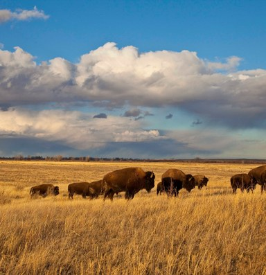 Montana refuge divides tribes and ranchers