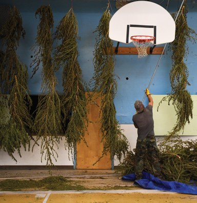 Hemp is one town's way out of a uranium mining past