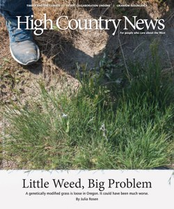 Little Weed, Big Problem