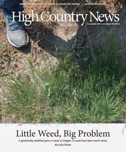 Little Weed, Big Problem