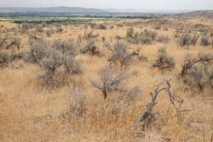Latest: Sagebrush conservation efforts are failing