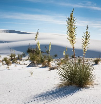 The wonder of White Sands