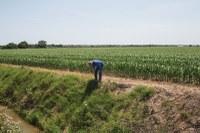 GMO grass is creeping across Oregon