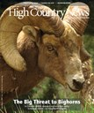 The Big Threat to Bighorns