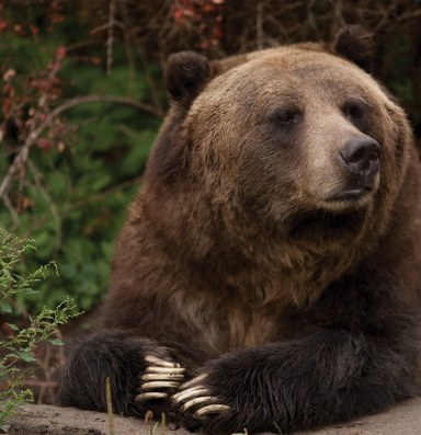 Latest: Wyoming and Idaho to hold grizzly hunts