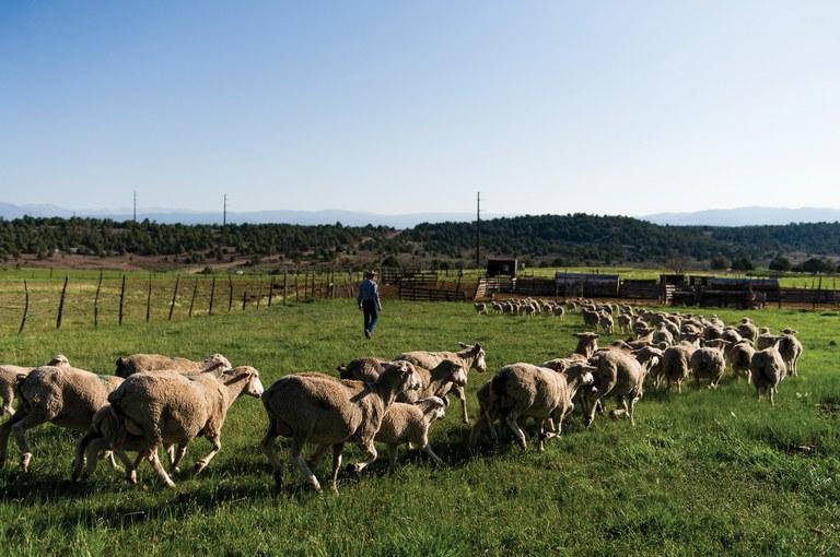 Agricultural interests steer Colorado's wildlife management