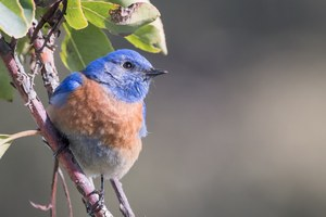 We should all be more like 'the bluebird man'