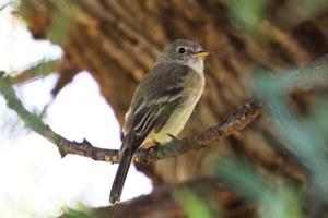 Latest: Long-term noise pollution gives birds PTSD