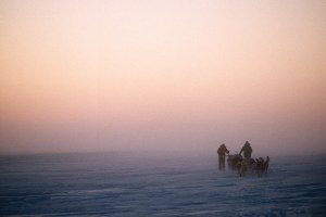 Life lessons learned on a dogsled