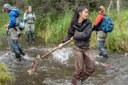Tossing salmon for science