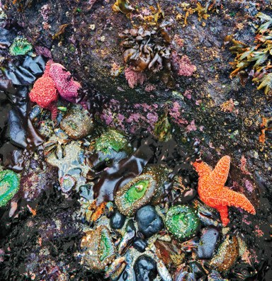 You're made of the same stuff sloshing around in tidepools