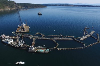Washington state bans salmon farms