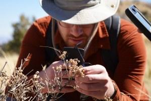 Along the border, 500 miles of desert species