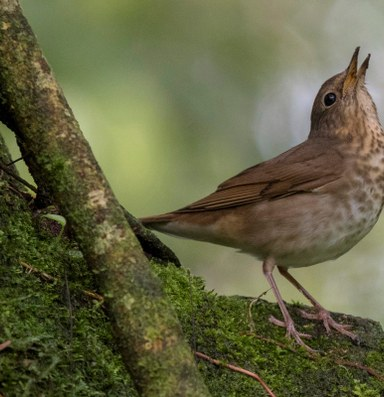 A bird's song adds wonder to the world