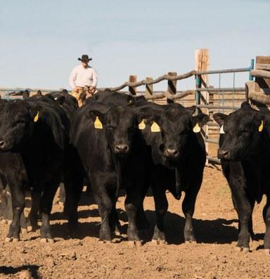 Ranchers sue major meatpackers